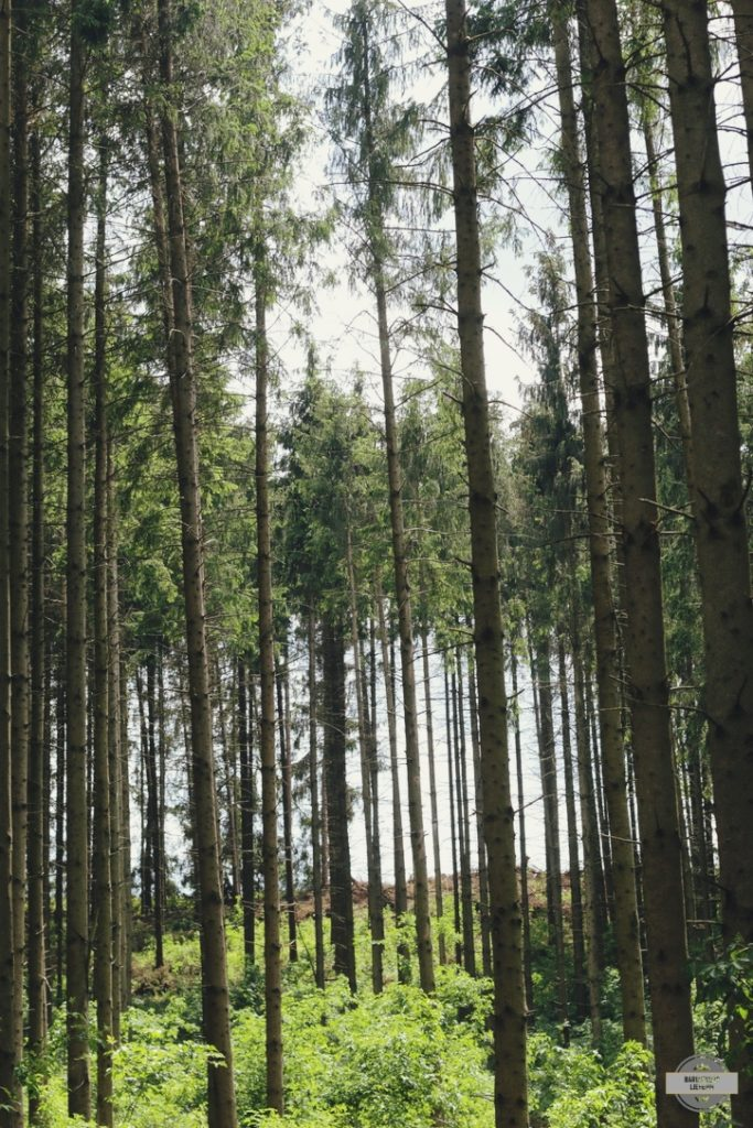 Coeur de l'Ardenne Belge Forêt ardennaise