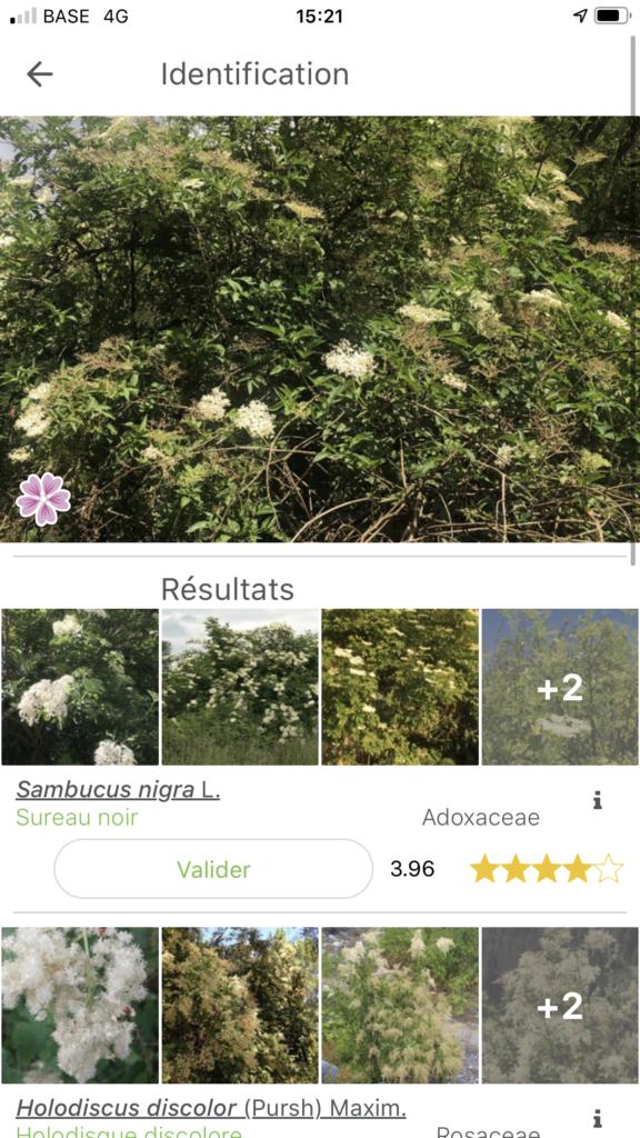 application plantnet reconnaitre arbres et fleurs