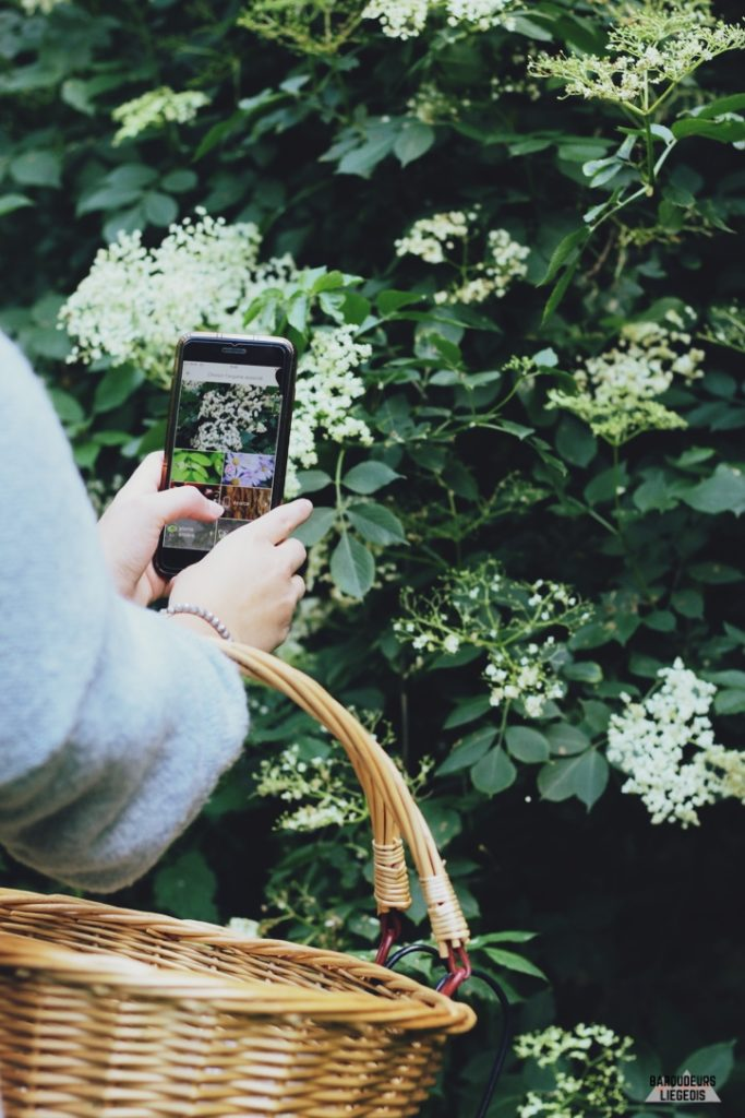application plantnet fleurs de sureau noir