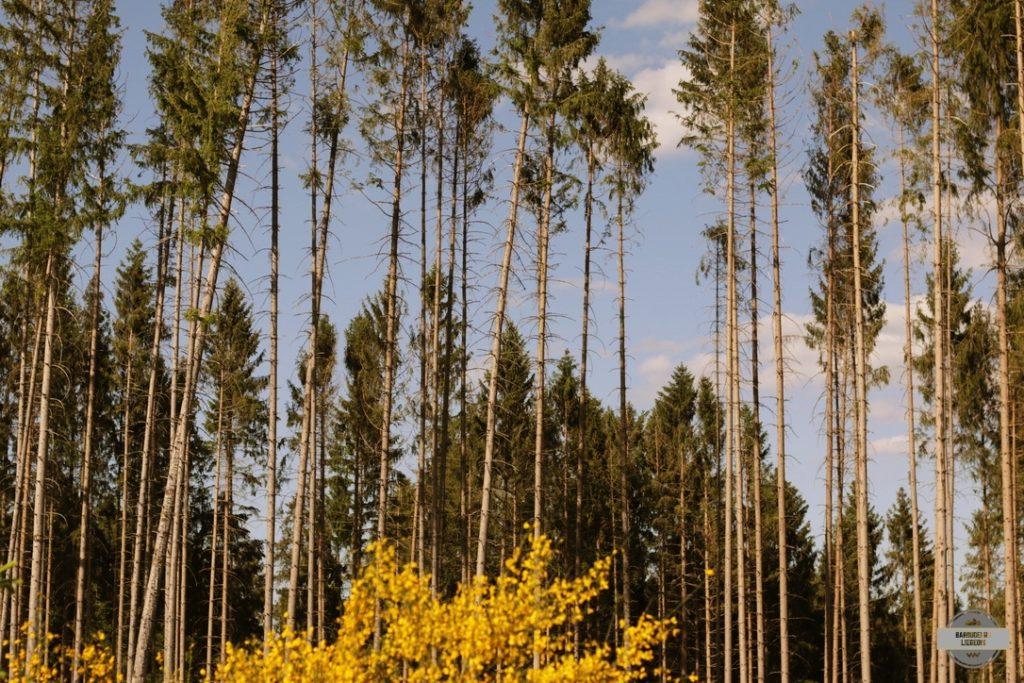 bois des ardennes randonnée