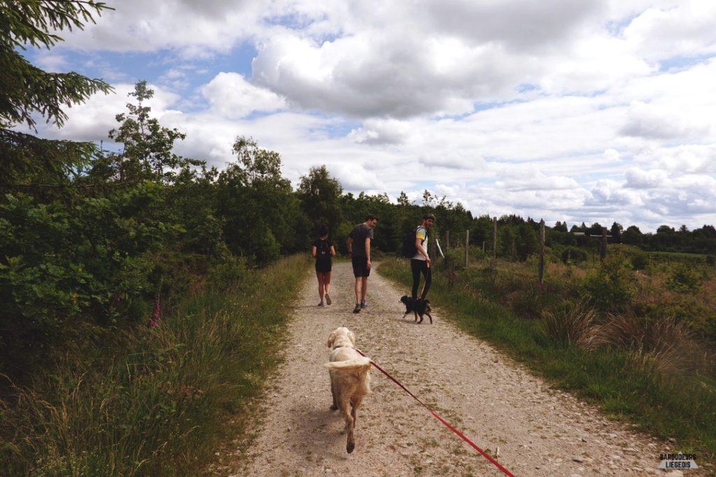 Sentier de randonnée adapté aux chiens