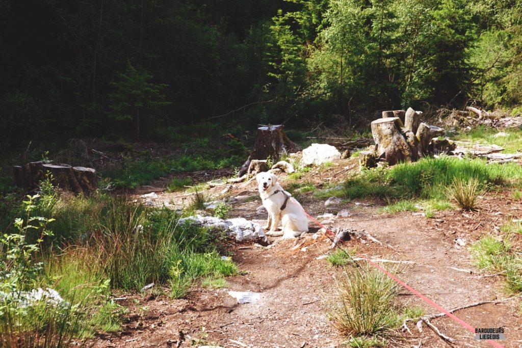 Balade pour chien à la cascade du bayehon